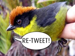 Be sweet - retweet on Twitter